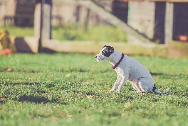 Láthatatlan kutyakerítés